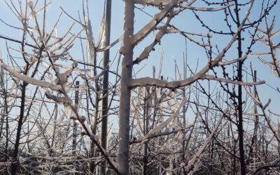 Zastita od mraza – kako zaštiti zasade od prolećnog izmrzavanja