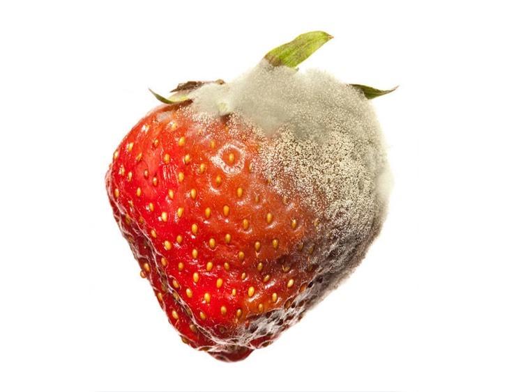trulez ploda jagode